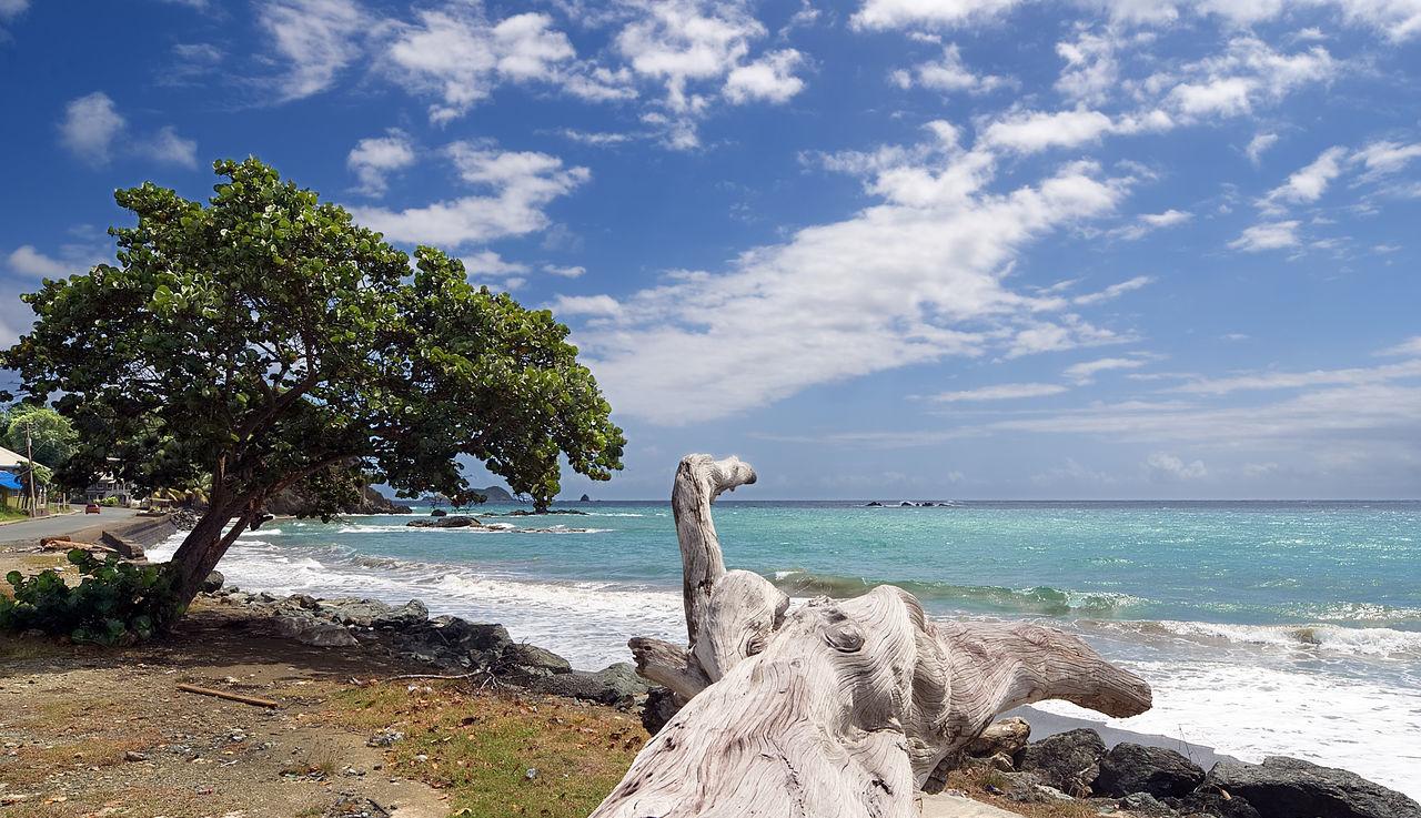 Republic of Trinidad and Tobago - Tobago island - Roxborough beach - Tropical beach of Atlantic ocean Animal Atlantic Atlantic Ocean Beach Cloud Cloud - Sky Island Landscape Nature No People Ocean Outdoors Roxborough Sand Sea Sky Tobago Tobago Beach Tree Tree Trinidad Trinidad And Tobago Trunk Water Wave