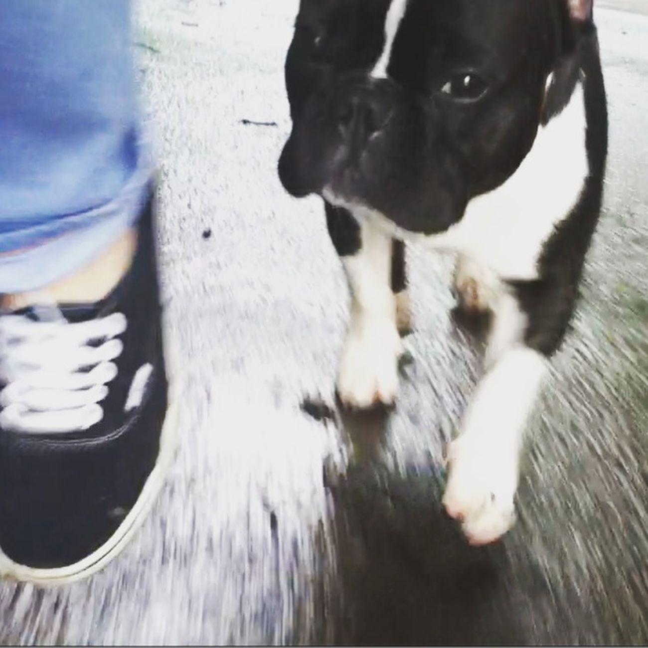 Take a Walk Französische Bulldogge  Check This Out EyeEm Best Shots Deutschland Dog Puppy Vans
