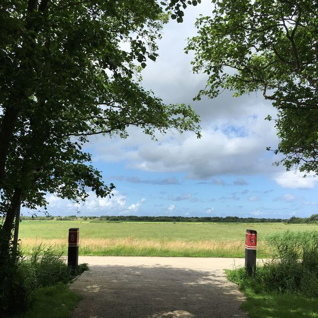 Dutch Skies Dutch Countyside Island Schiermonnikoog Nature_collection Blue Sky Skyporn Trees Dutch Landscape