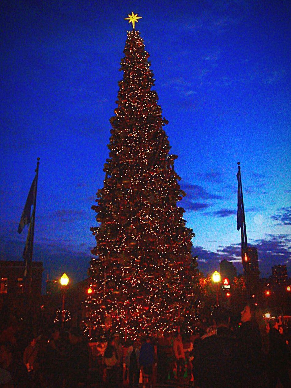 The Culture Of The Holidays San Francisco Fisherman Pier 39 Fisherman Pier Christmas Tree Christmas Christmas Lights Outdoors Sky Tall - High Night Eye4photography  EyeEm Gallery Eyeemphotography Eyemphotography EyeEm Eyeemphoto Eyem Gallery Yılbaşı Yılbaşı Ağacı Hello World California Eye4photography  Celebration