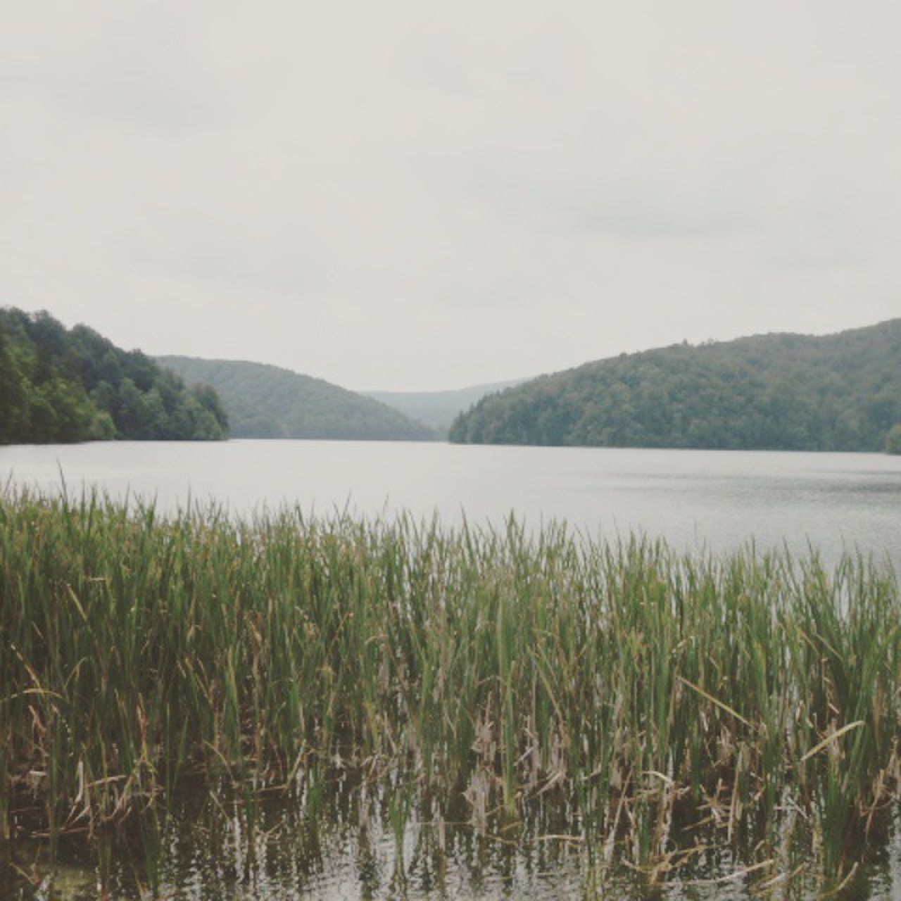nature, lake, mountain, tranquility, water, beauty in nature, growth, scenics, tranquil scene, sky, no people, outdoors, day, landscape, plant, grass