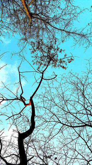 Blue Skies Treetastic Relaxing
