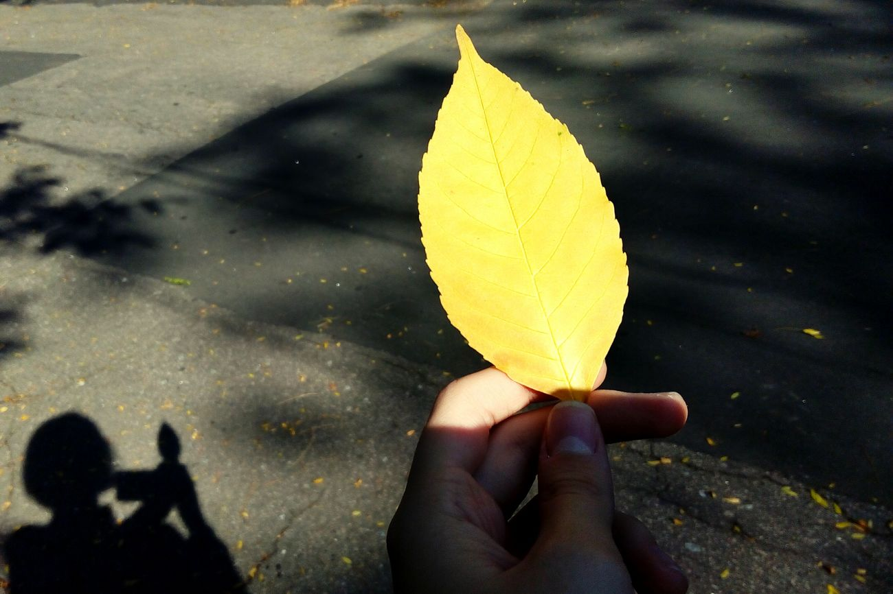 Road Street Shadow Low Section Holding Yellow Person Limb Outdoors Day Light Sun Leaf Leaves Yellow Yellow Color Yellow Leaf Shadow Of Myself Shadow Of Woman Shadow Of Trees