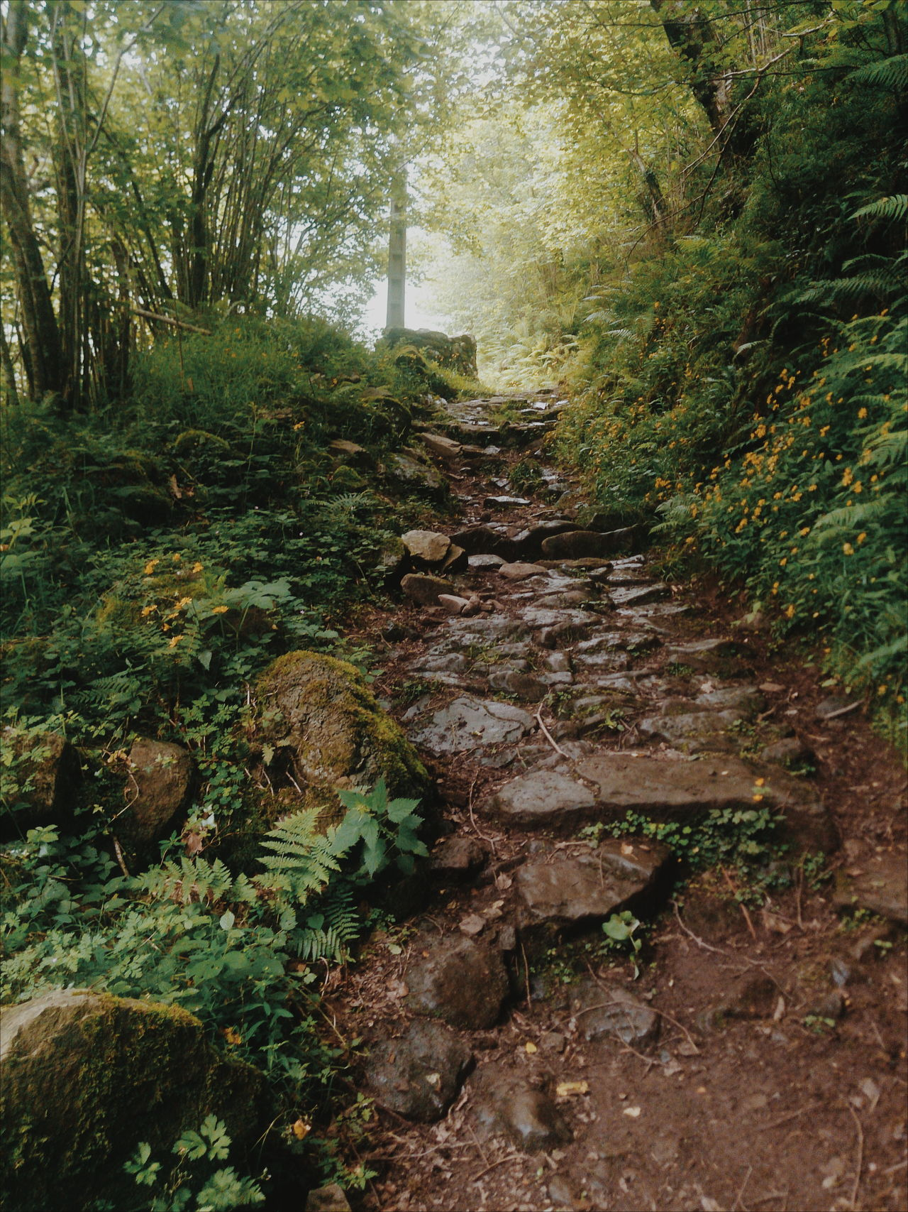 Forest Road Beauty In Nature Day Diminishing Perspective Footpath Forest Grass Green Color Growth Landscape Lush Foliage Moss Narrow Nature No People Non Urban Scene Non-urban Scene Outdoors Plant Rock - Object Scenics The Way Forward Tranquil Scene Tranquility Tree Walkway