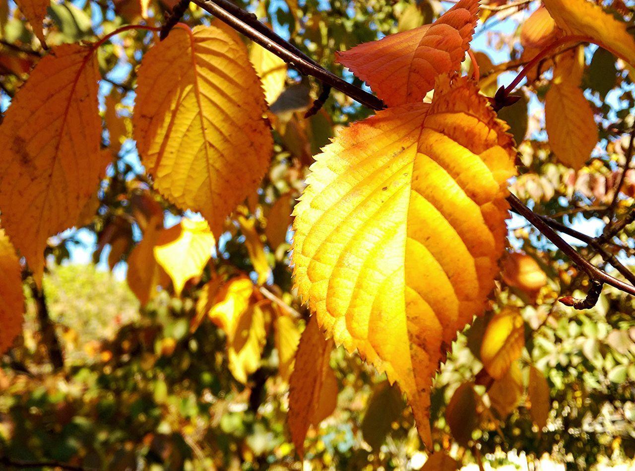 43 Golden Moments Nature_collection EyeEm Best Shots eye via Fotofall