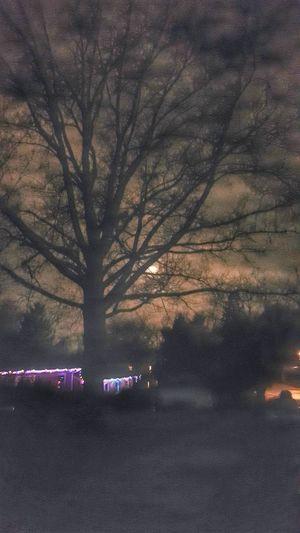 Nigth 🌜⭐️ Nightphotography Moon Night Photography Night Lights Nightshot Moonlight Moon_collection Tree_collection  TreePorn