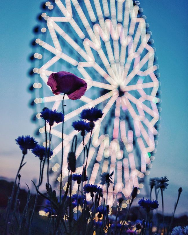 Cities At Night Night Lights Depth Of Field Bokeh Ferris Wheel Poppy Flowers EyeEm Best Shots Eye4photography  Vscocam Vscogood VSCO Nature_collection