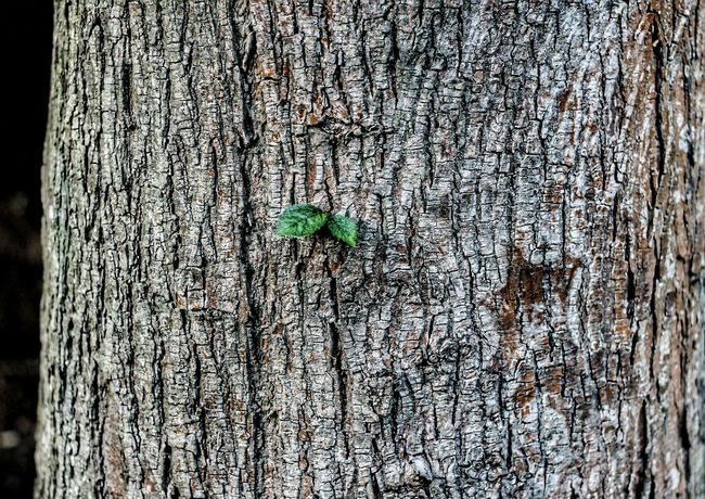 Close-up Tree Lone Plant Nature Beauty In Nature Patterns In Nature Wood EyeEm Selects