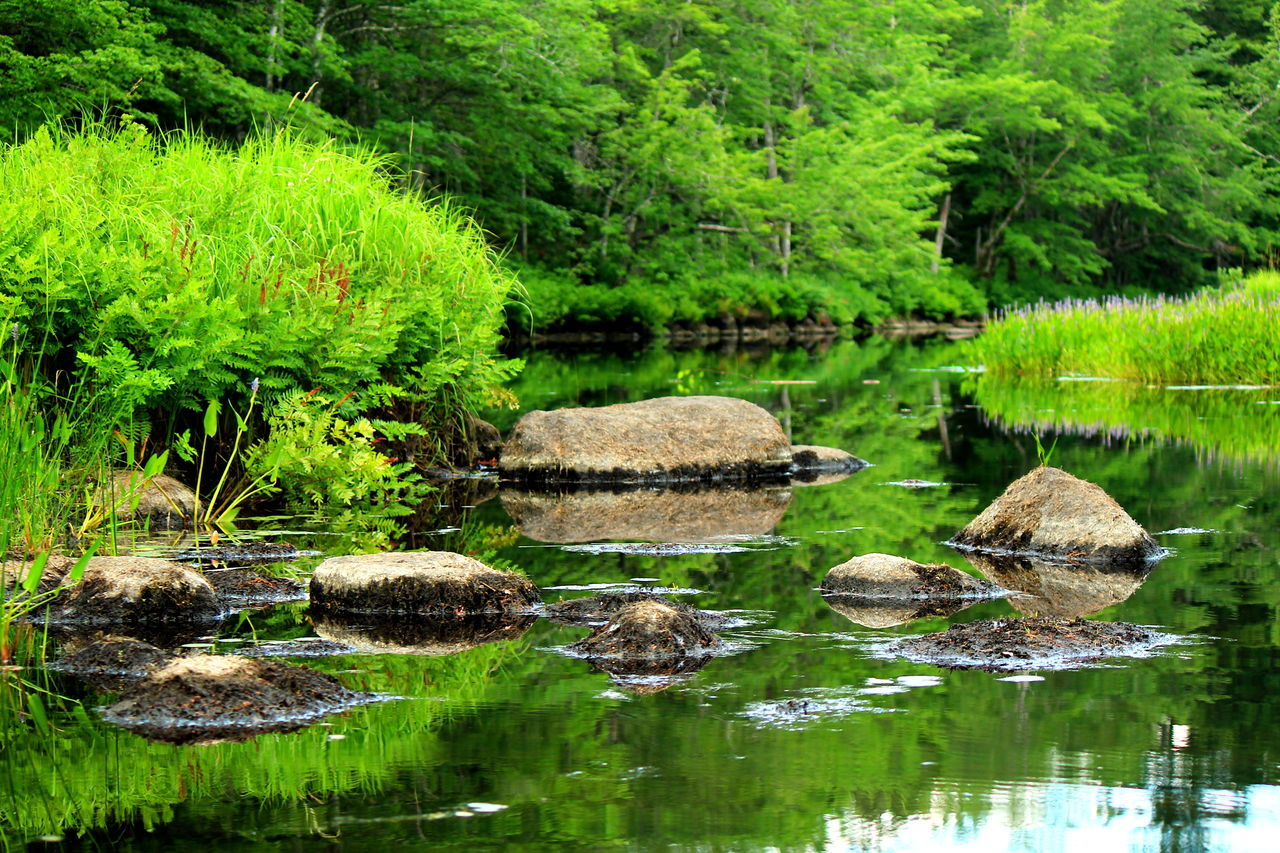 Scenic View Of Calm Lake Plants Reflection