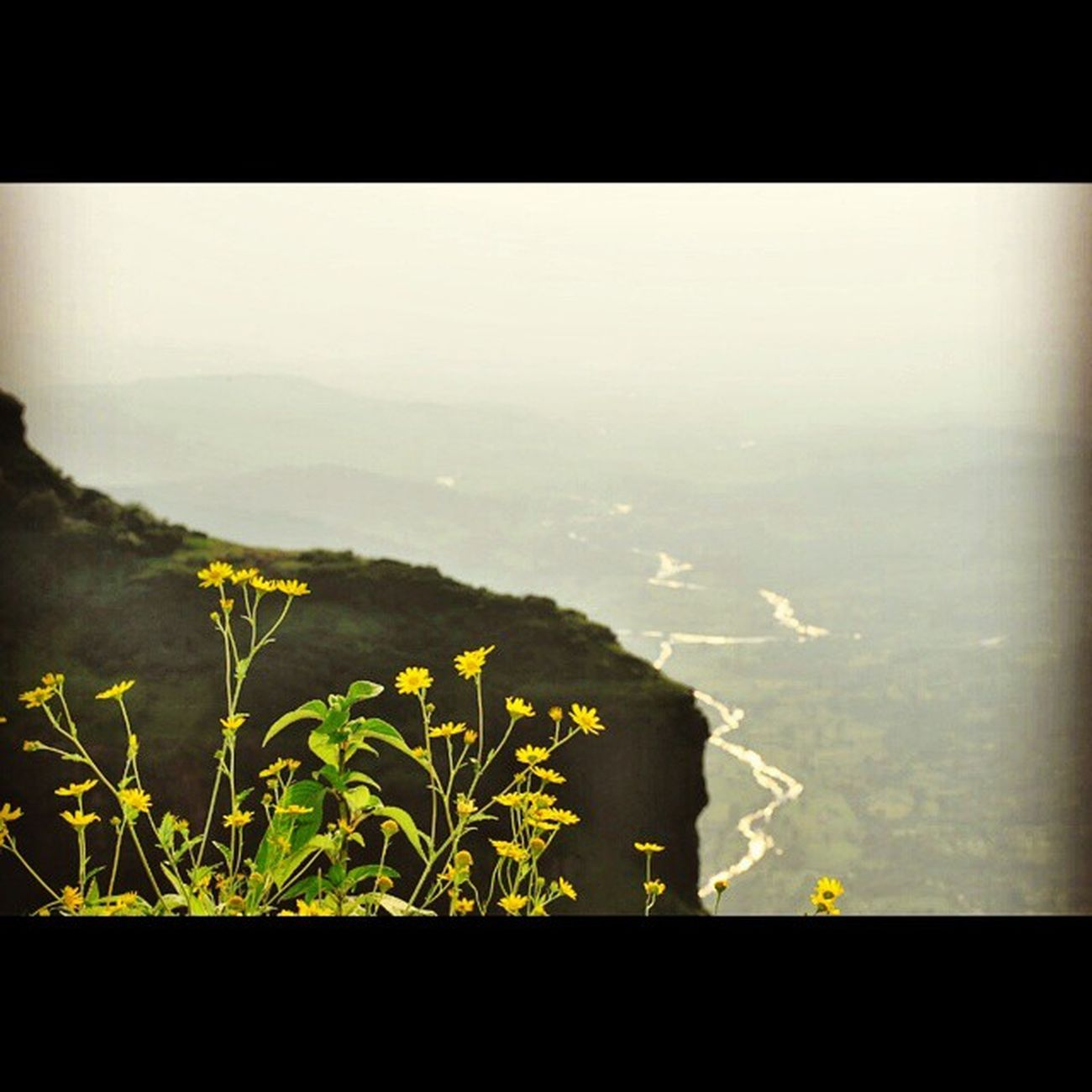 Fragile! Shots from a dream.. Fromadream Instapic Instagram Flowers Valley Mountain Yellow Stream Sunset Instadream Roadtrip Travel Someplace