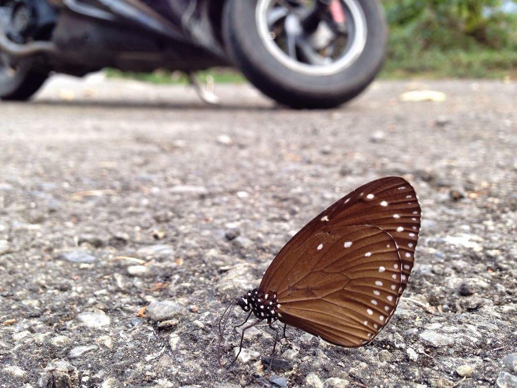 蝶影杳杳 Buterfly