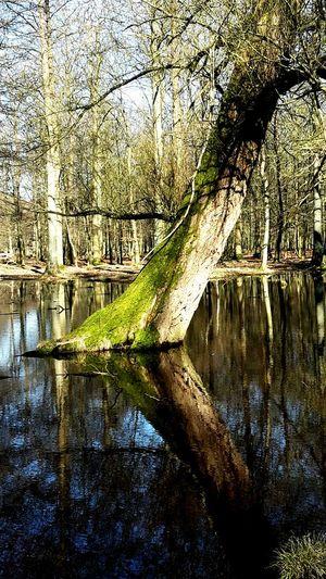 """Tree in the middle"" Denmark Copenhagen Trees Nature Naturepark Dyrehaven Wild"