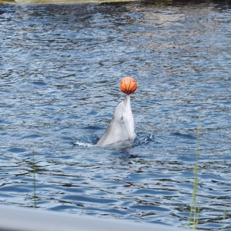Beautiful Animal Water Outdoors One Animal No People Dolphin