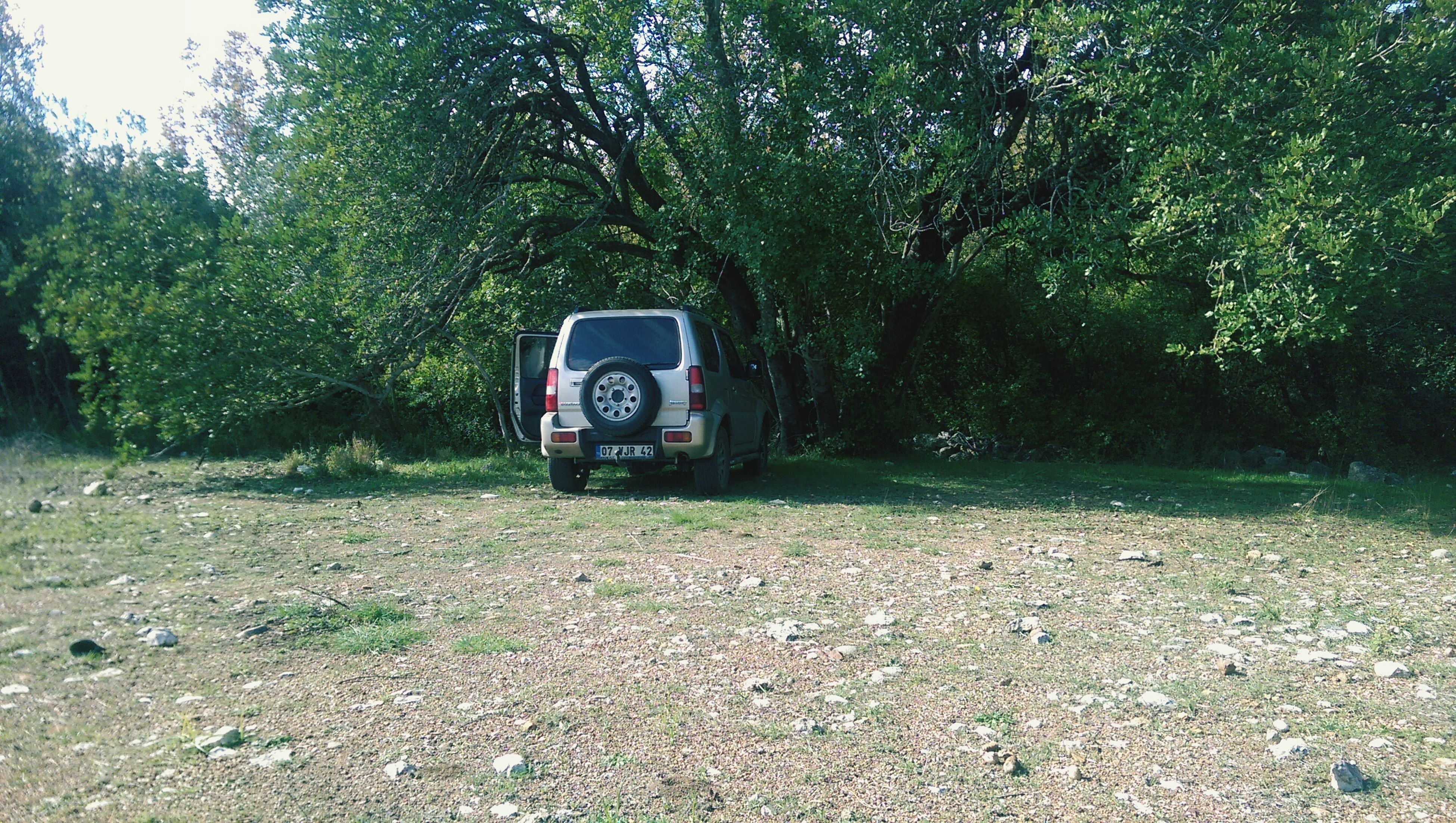 tree, transportation, land vehicle, mode of transport, growth, car, tranquility, nature, field, day, plant, landscape, outdoors, tranquil scene, grass, travel, road, green color