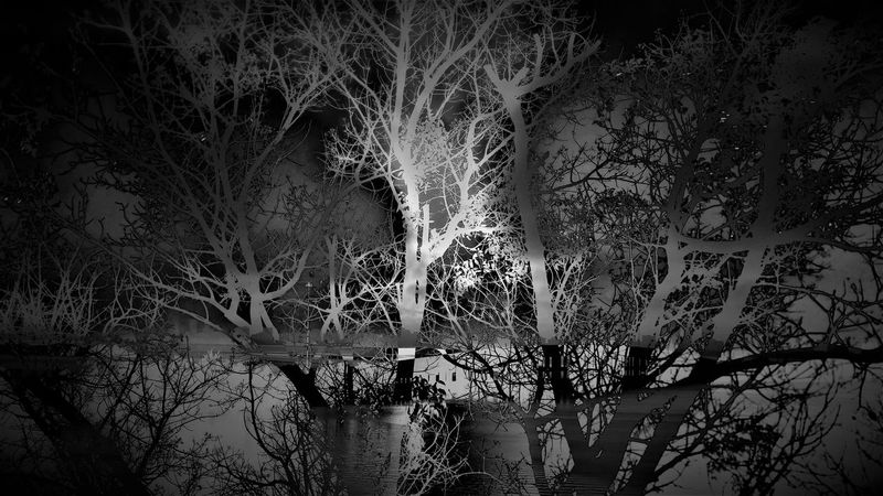 Branches Double Exposure Silhouette Trees Black And White Blackandwhite Darkness And Light Light And Shadow Monochrome Two Layers