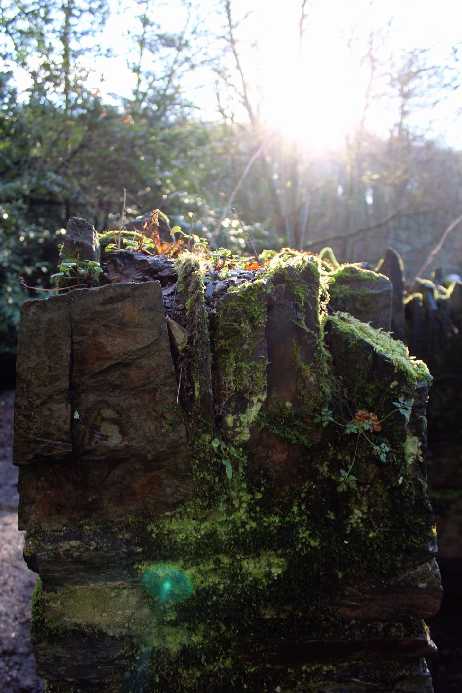 Wall Sun Woods Devon Plymbridge Woods Plymbridge