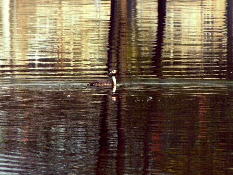 Water Animal Themes Bird Waterfront Lake Mirror Mirror Reflection LakeReflection