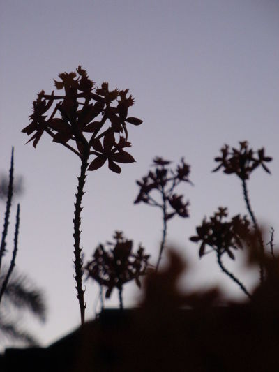 Beauty In Nature Close-up Flowers Fragility Growth Nature No People Outdoors Plant S Sillouette Sky Sunset