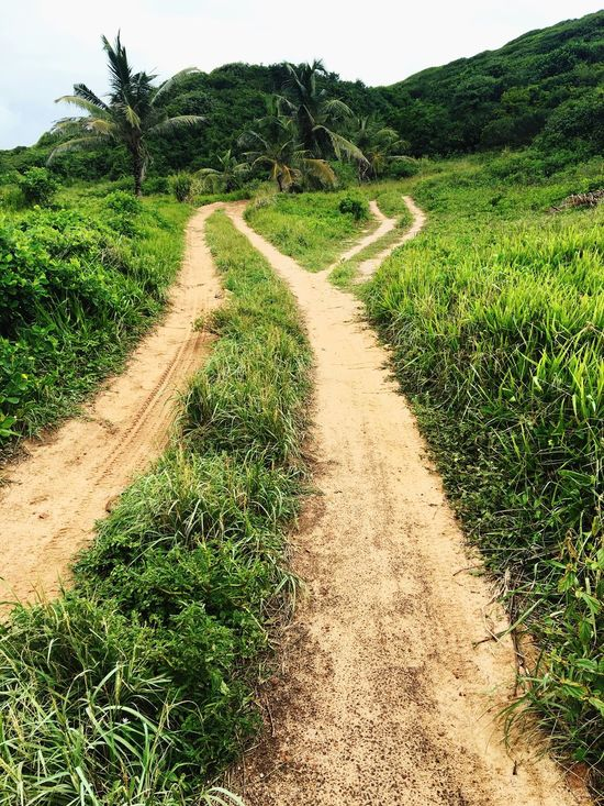 The Way Forward Nature Dirt Road Field Landscape Growth Grass Agriculture Rice Paddy Plant Tranquility Day No People Green Color Outdoors Beauty In Nature Rural Scene Rice - Cereal Plant Scenics Road TheBestOfBrazil