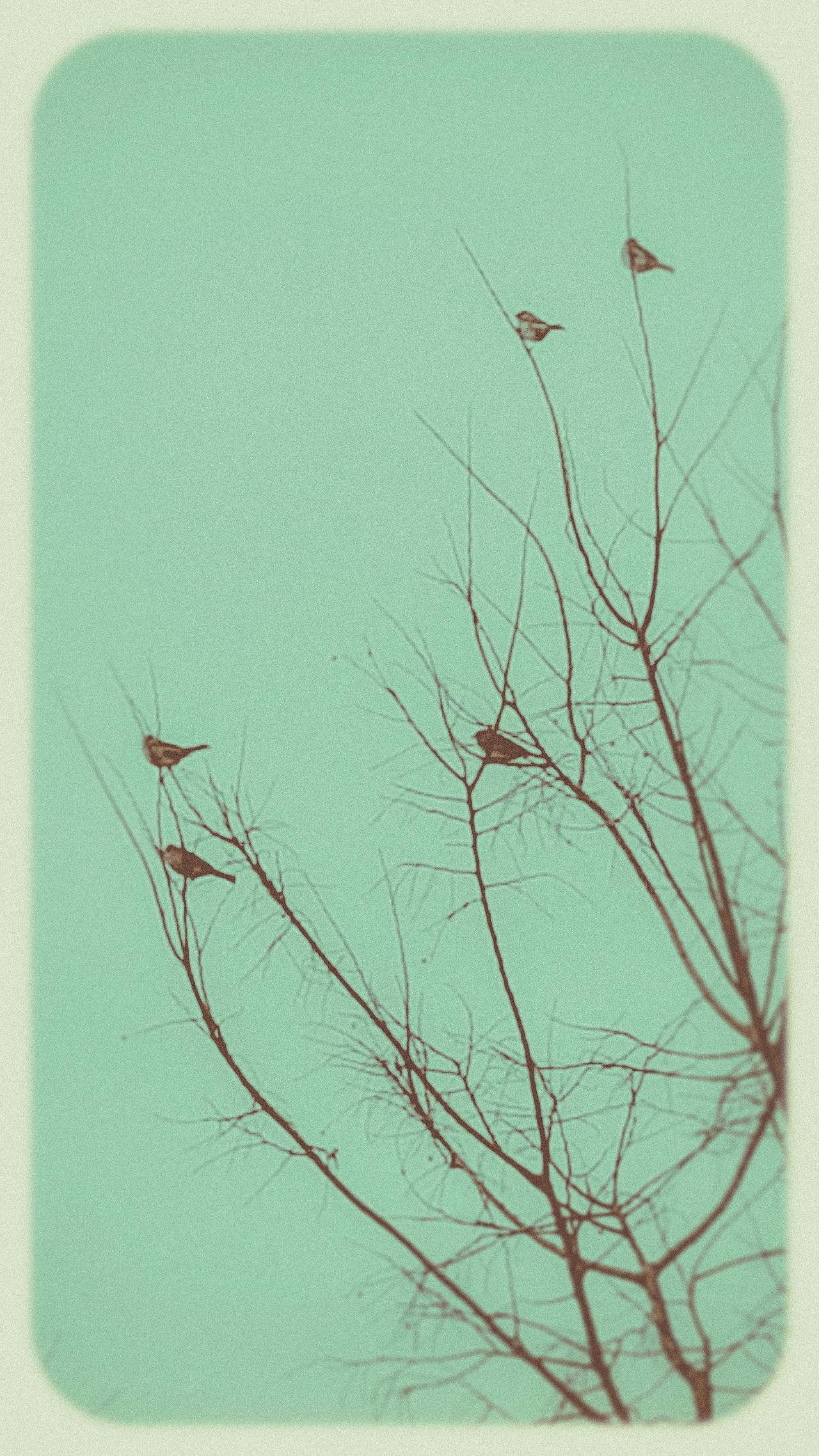 Artistic Bird Silhouette Bird Silhouettes Birds Birds & Trees Birds And Sky  Birds And Trees Pastel Pastel Sky Silhouettes Stylized Tree Branches Vintage Showcase: February