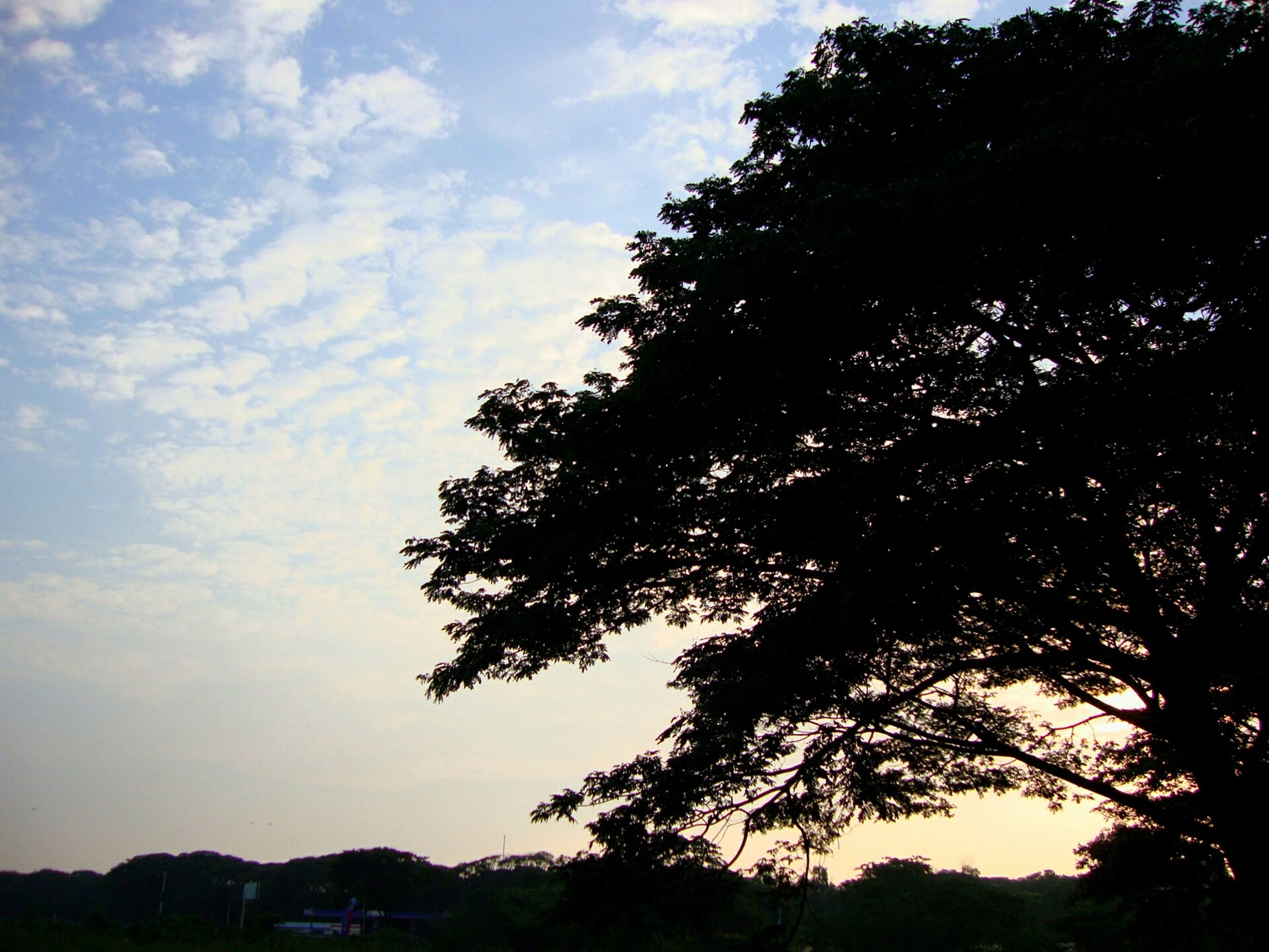 tree, silhouette, tranquility, sky, sunset, tranquil scene, beauty in nature, scenics, nature, growth, cloud - sky, landscape, idyllic, dusk, non-urban scene, cloud, outdoors, no people, low angle view, outline