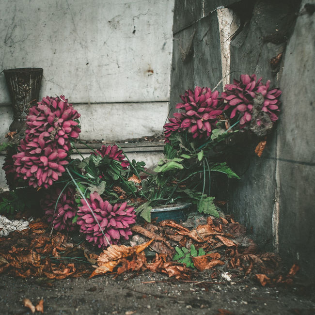 Abandoned Places Cimetary Cimetière Du Père Lachaise Dead Flowers Fragility Melancolia Mood Pastel Colors Weathered