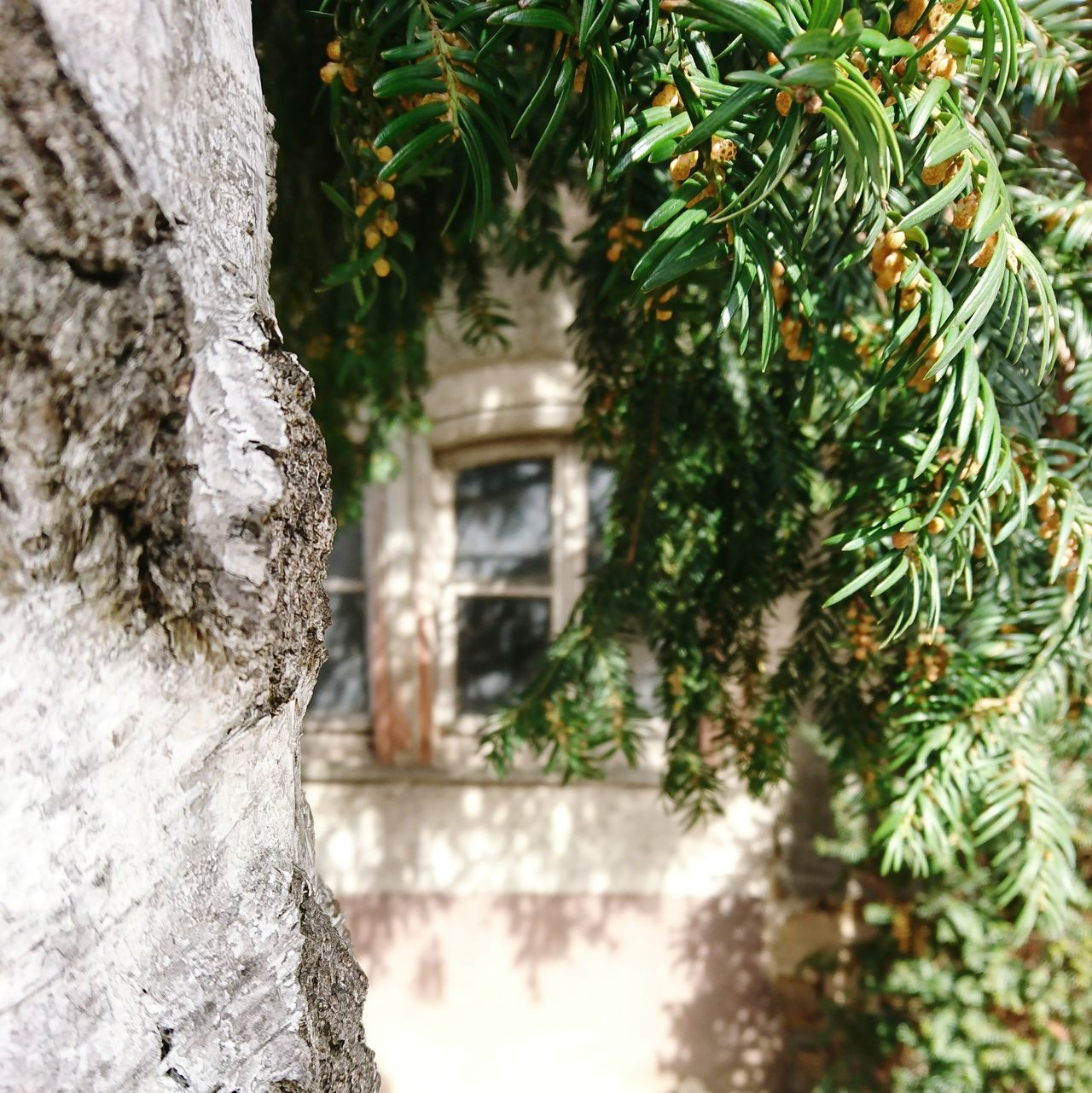 Lost places.... Tree No People Close-up Green Color Nature Day Outdoors Architecture Built Structure Focus On Foreground