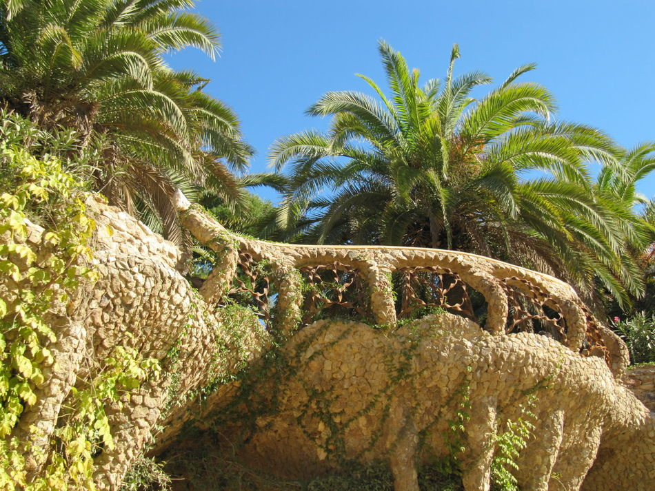 Barcelona Park Guell Park Güell, Barcelona Palm Tree Tree Sky Nature Outdoors Beauty In Nature Antoni Gaudí Blue Blau Himmel No Clouds Wolkenlos Travelphotography Travelling Travel Destinations Canon Powershot SX200 IS Canon Powershot