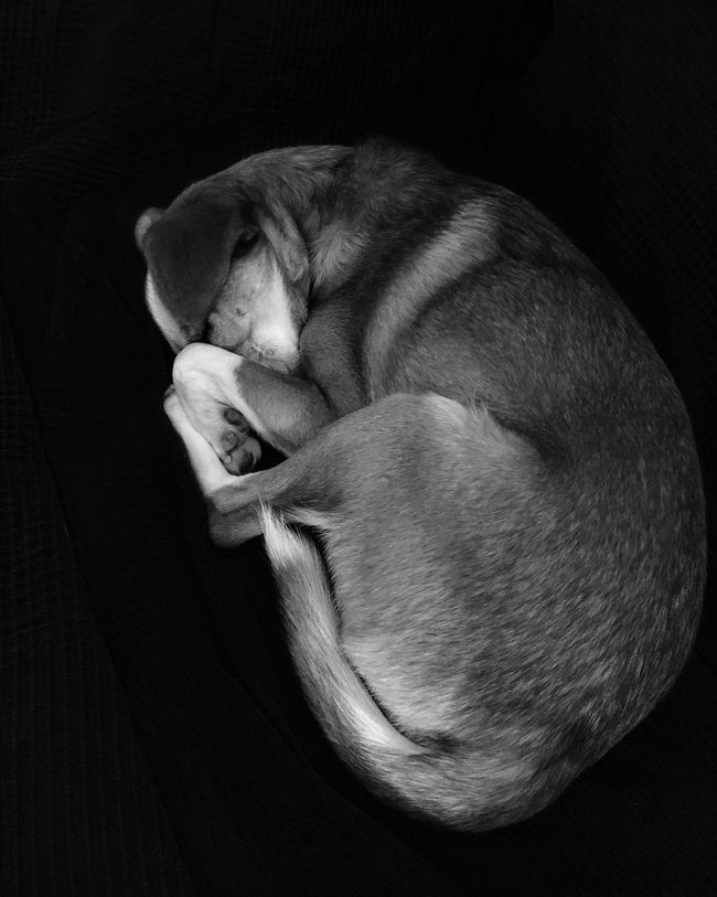• Mou • Photoshoot B/W Photography Dog Fotografia Biancoenero Mydog Happiness Love Pisolo Mou