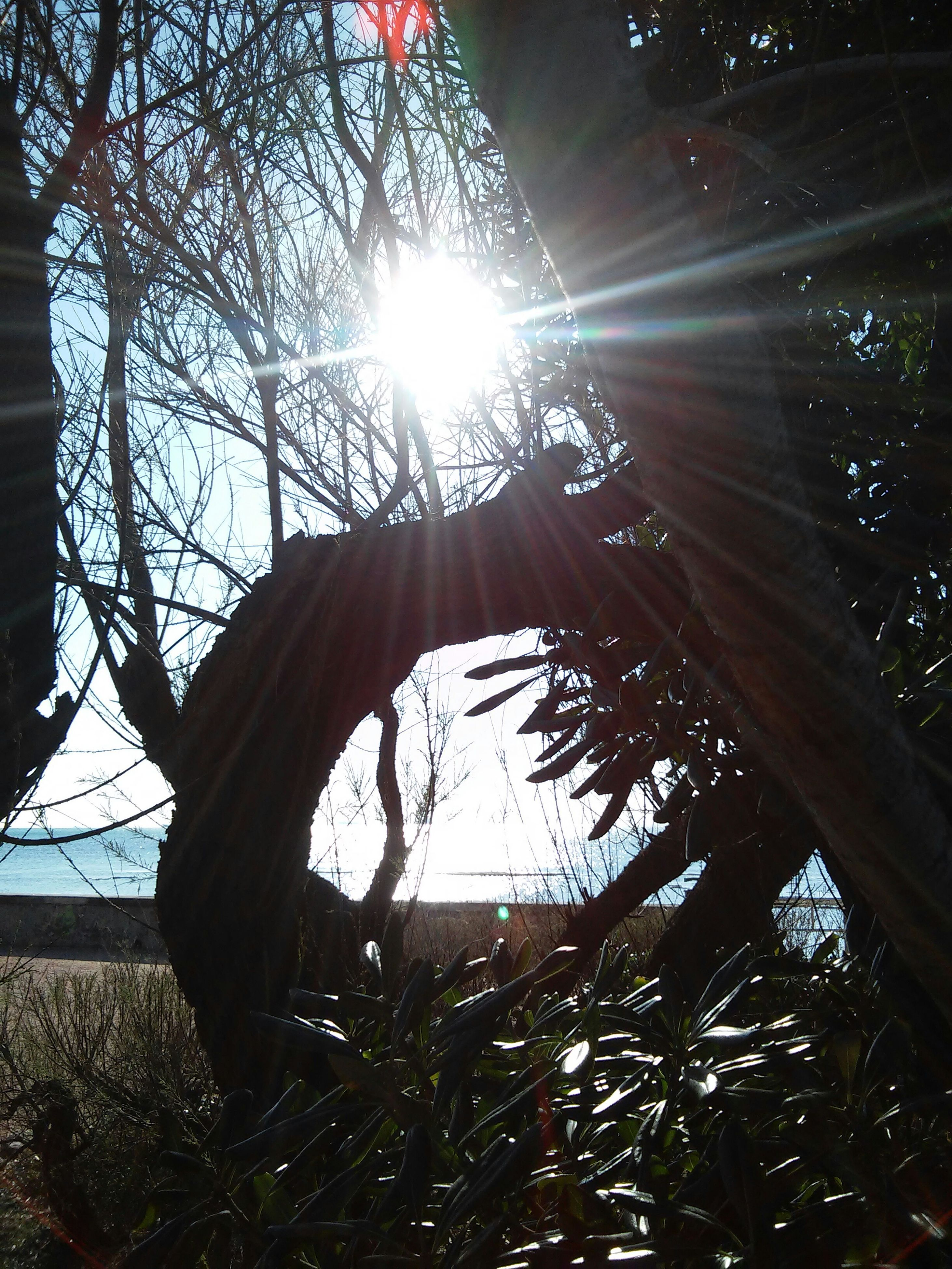 sun, tree, sunlight, sunbeam, lens flare, branch, nature, low angle view, tranquility, growth, bare tree, beauty in nature, sunny, bright, sky, day, outdoors, no people, back lit, tranquil scene
