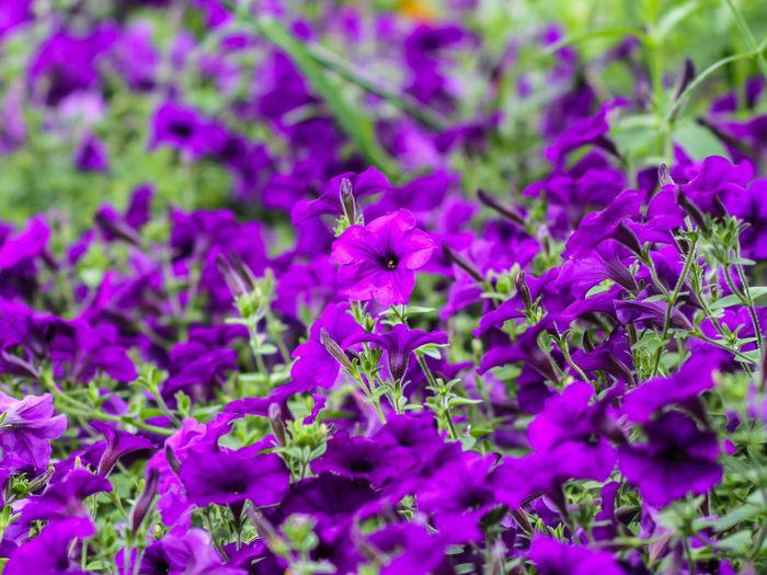 Colour Of Life Nature Flowers Flower Adventure Club Bright Colors Nature Photography Columbus, Ohio Detail The Week Of Eyeem Color Palette Bestshot Purple Closeup Macro Goodale Park