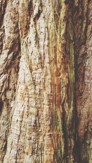 Full Frame Backgrounds Textured  No People Day Nature Tree Trunk Outdoors Pattern Close-up Growth Tree Beauty In Nature Bark Bark Texture Barks Of A Tree BYOPaper! Samsung Galaxy S6 Edge The Great Outdoors - 2017 EyeEm Awards Mobile Photography Mobile Phone Photography EyeEmNewHere Craigtounpark Brown Color Bark Texture Background