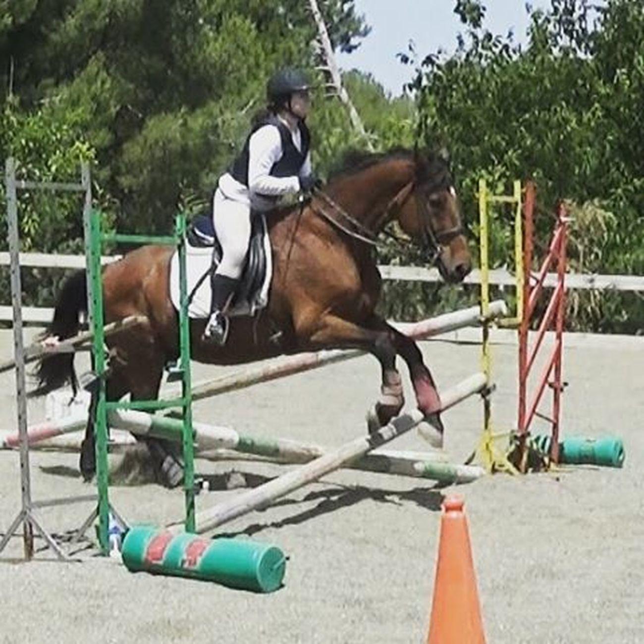 Jumping Horsestagram Equine Love Horserider Loveit Animallovers Equinephotography Binomio Passion