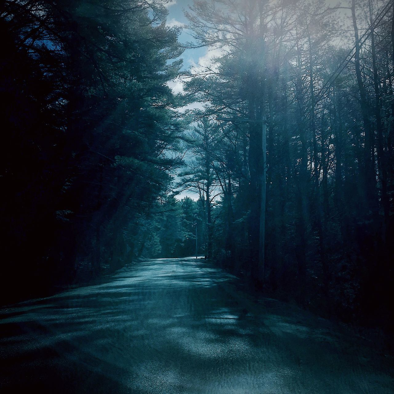tree, nature, tranquility, forest, the way forward, tranquil scene, beauty in nature, no people, day, landscape, scenics, outdoors, road, growth