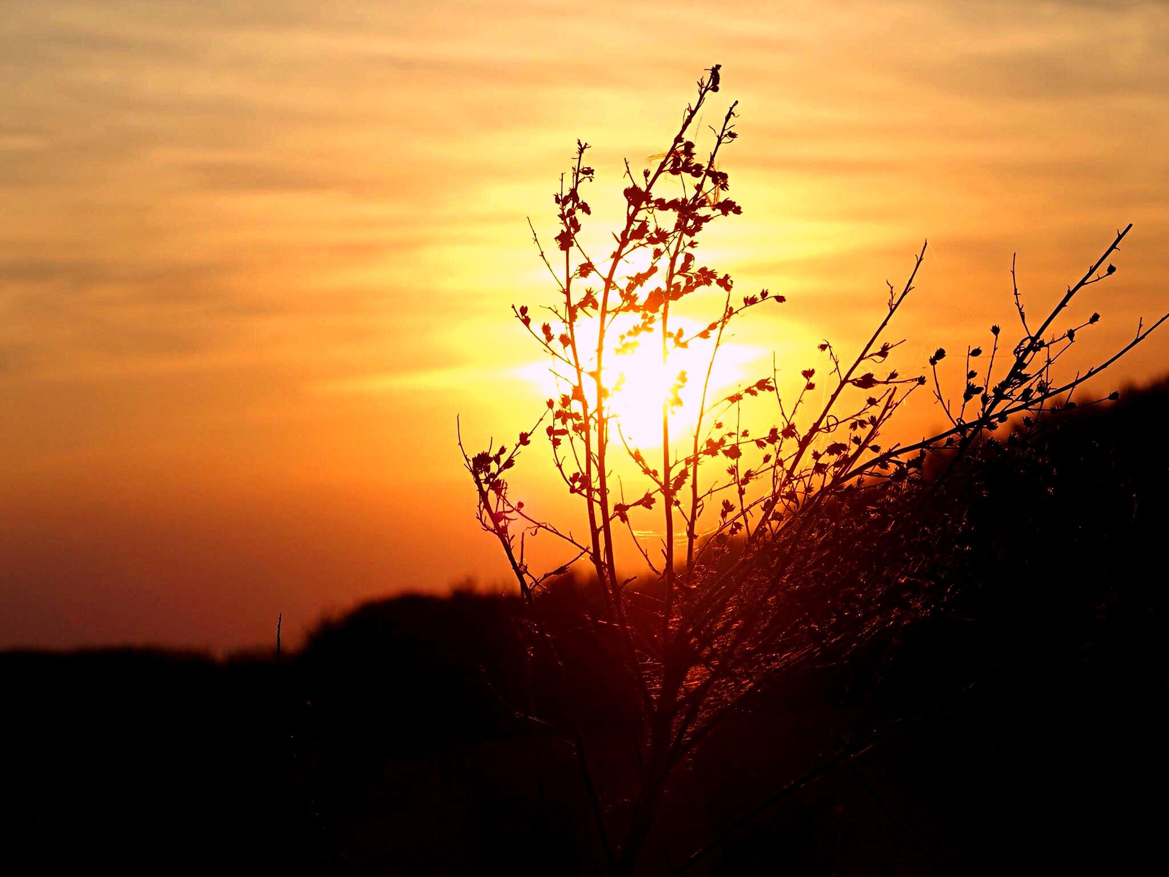 sunset, silhouette, beauty in nature, sun, sky, orange color, growth, nature, plant, tranquility, scenics, tranquil scene, stem, focus on foreground, field, idyllic, close-up, landscape, flower, sunlight