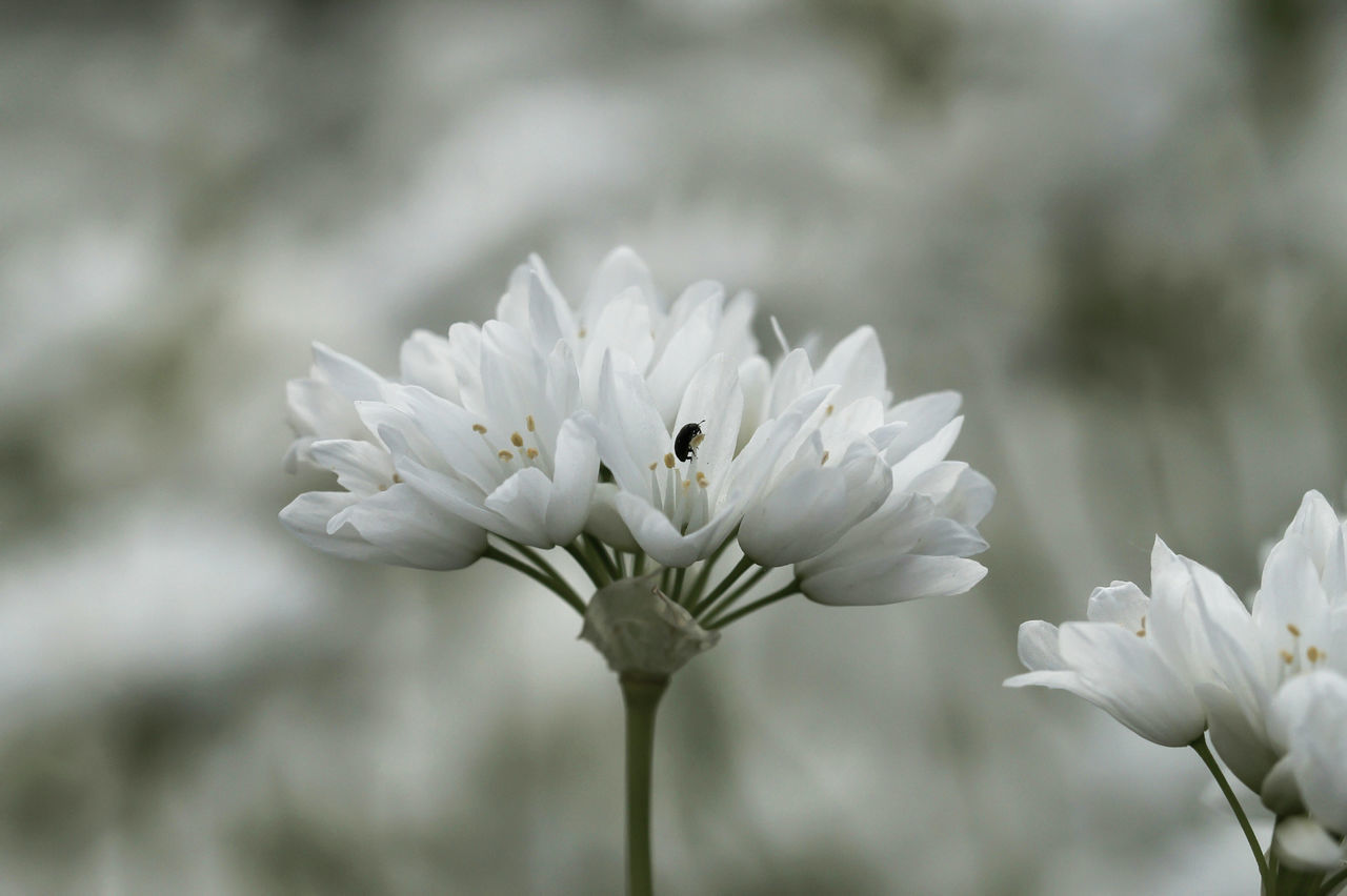 flower, petal, white color, fragility, nature, freshness, flower head, beauty in nature, growth, focus on foreground, plant, day, close-up, outdoors, blooming, one animal, no people, animal themes