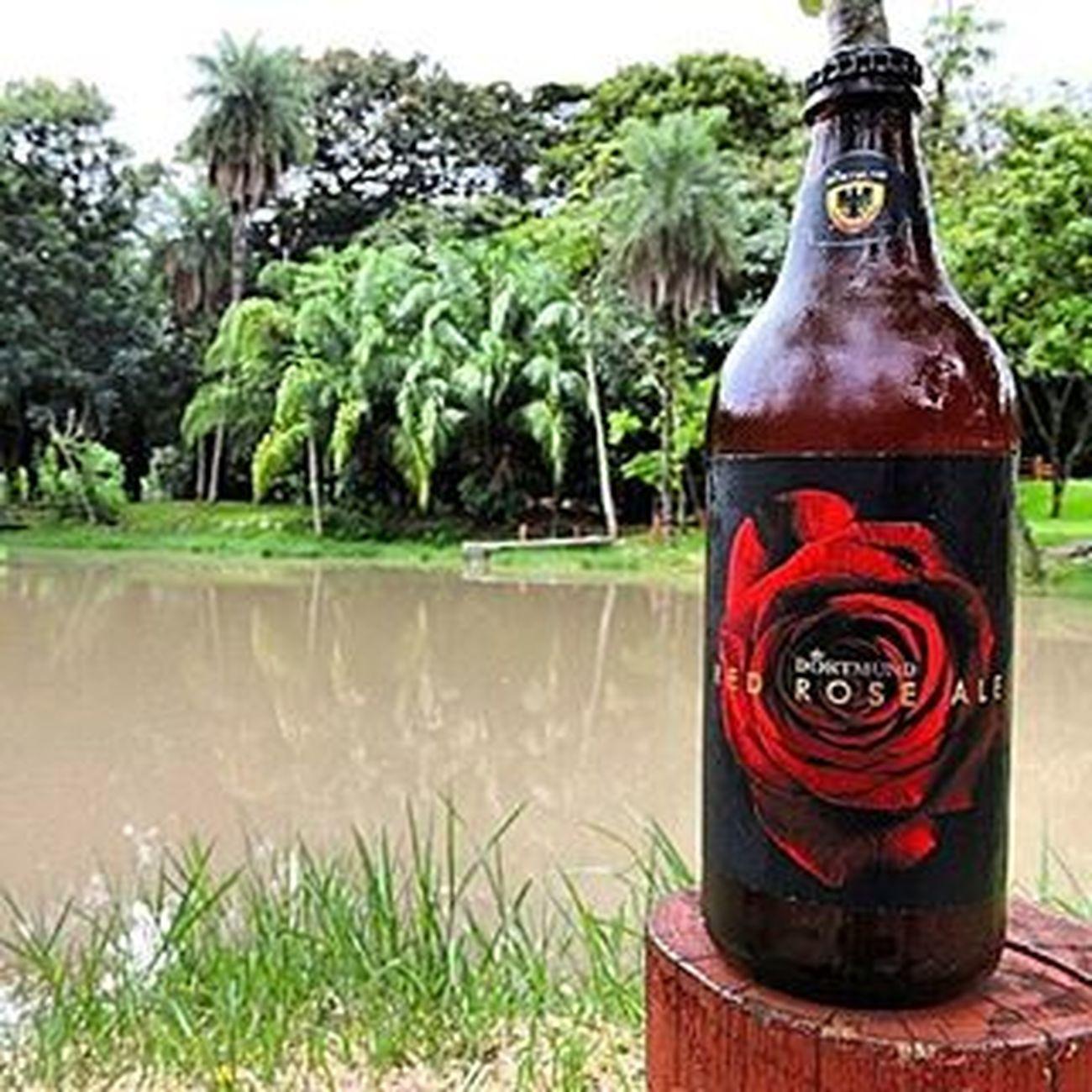 🍺 Dortmund Red Rose Ale 🍺 ARedRoseAleé uma cerveja de Alta fermentação, coloração avermelhada, corpo médio, bastante maltada com destaque especial para oblendde maltes. Possui aroma deToffeee caramelo com baixo amargor e notas florais. Destaque para esse rótulo show. País: Brasil Graduação alcoólica: 6,0% Cervejadortmund Ale 9ninebeers Cheers Cerveja Beer Beers Beergarden  Beeradvocate Beerlove Craftbeer Pivo Beerpics Beerlife Beergasm Beersnob Cerveza Craftbrew Birra Instabeer Instacerveja Beerstagram Craftbeerlife Cervejaartesanal Beergeek beertimebeertographybeerpornbeernerdbeeroftheday