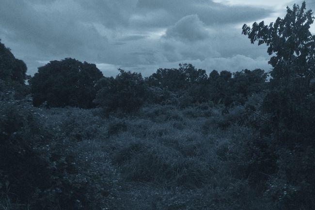 Melancholic Landscapes