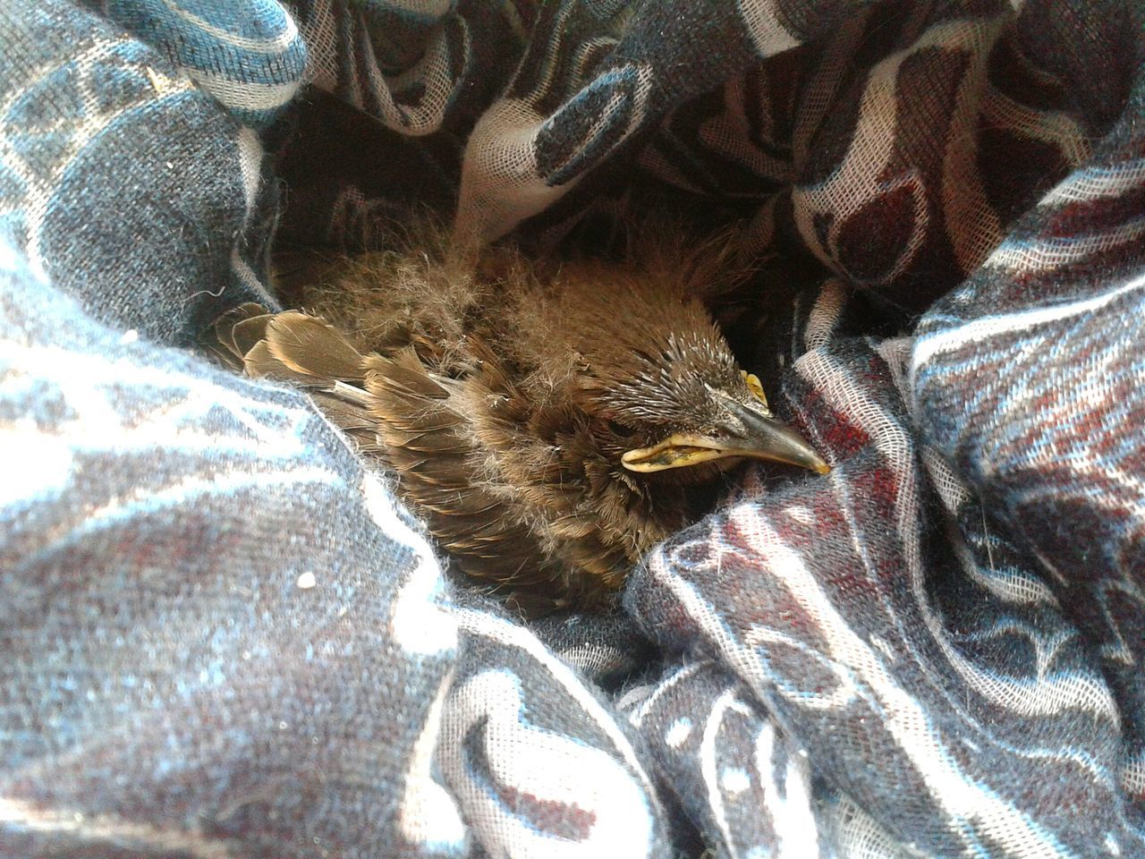 High Angle View Of Bird Relaxing Amidst Fabrics