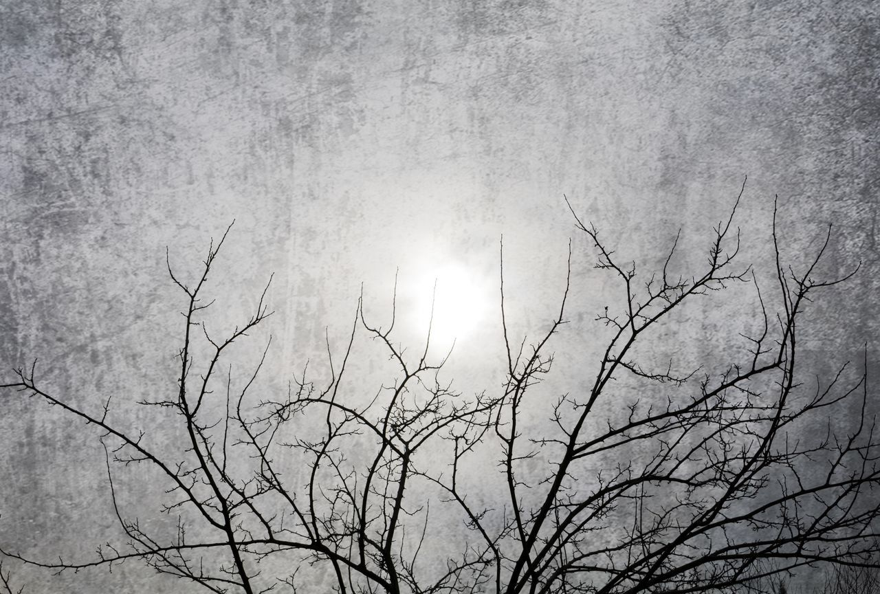 sun, nature, beauty in nature, bare tree, branch, outdoors, low angle view, tranquility, no people, tree, scenics, growth, day, sky