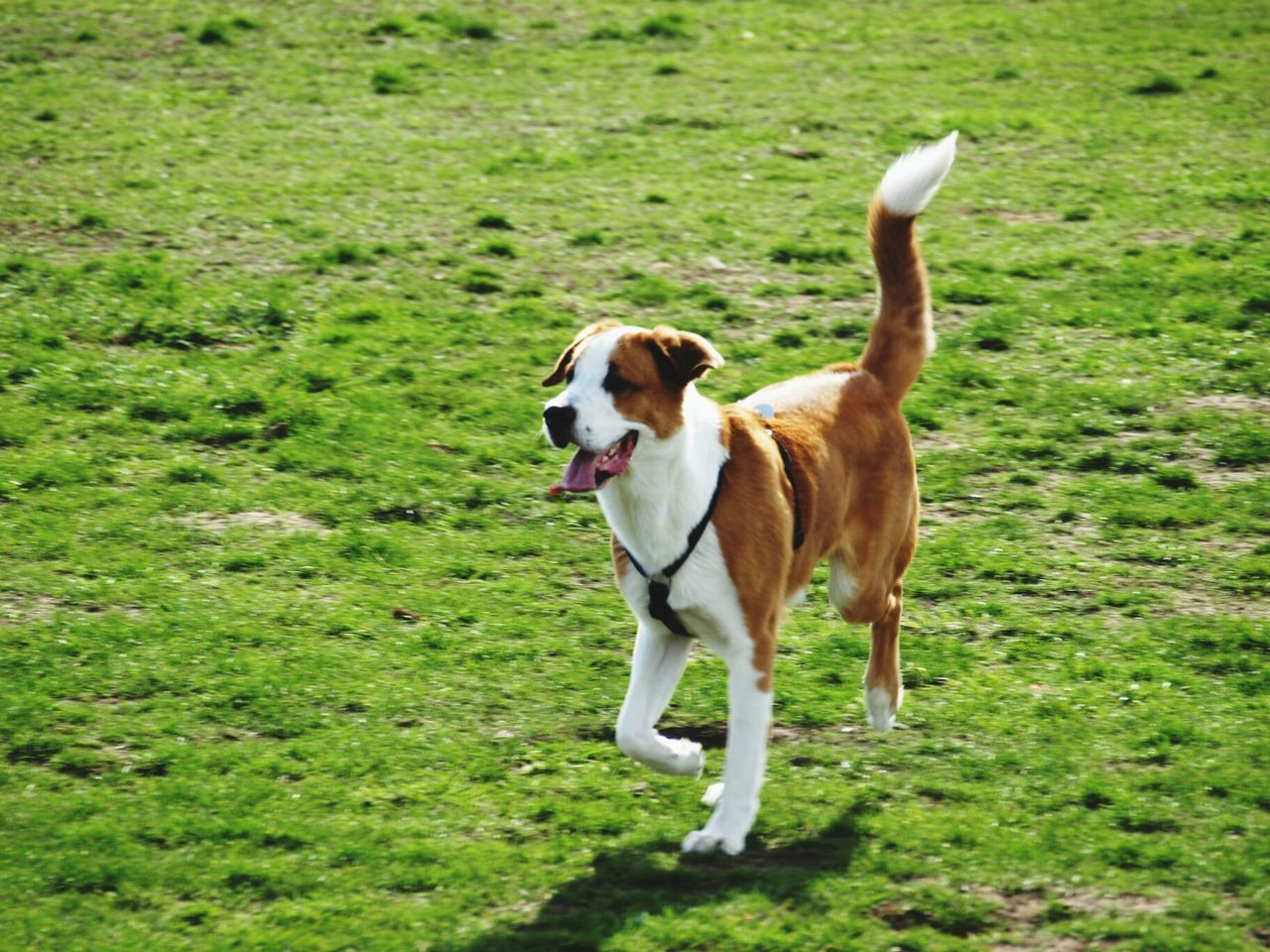 Hello World Doggy Tempelhofer Feld I Love My Dog Dog Training Emil Star Sun Taking Photos