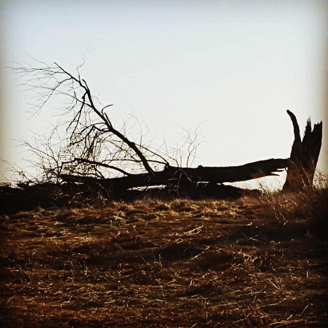 Beautifully Broken Trees Broken Beauty Nature Photography