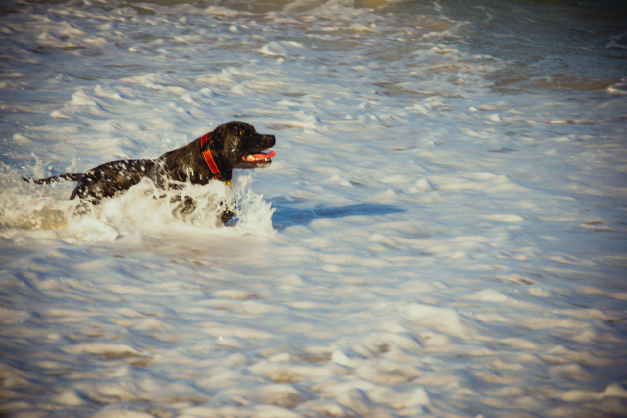 dog, pets, domestic animals, one animal, animal themes, mammal, no people, day, outdoors, water, nature