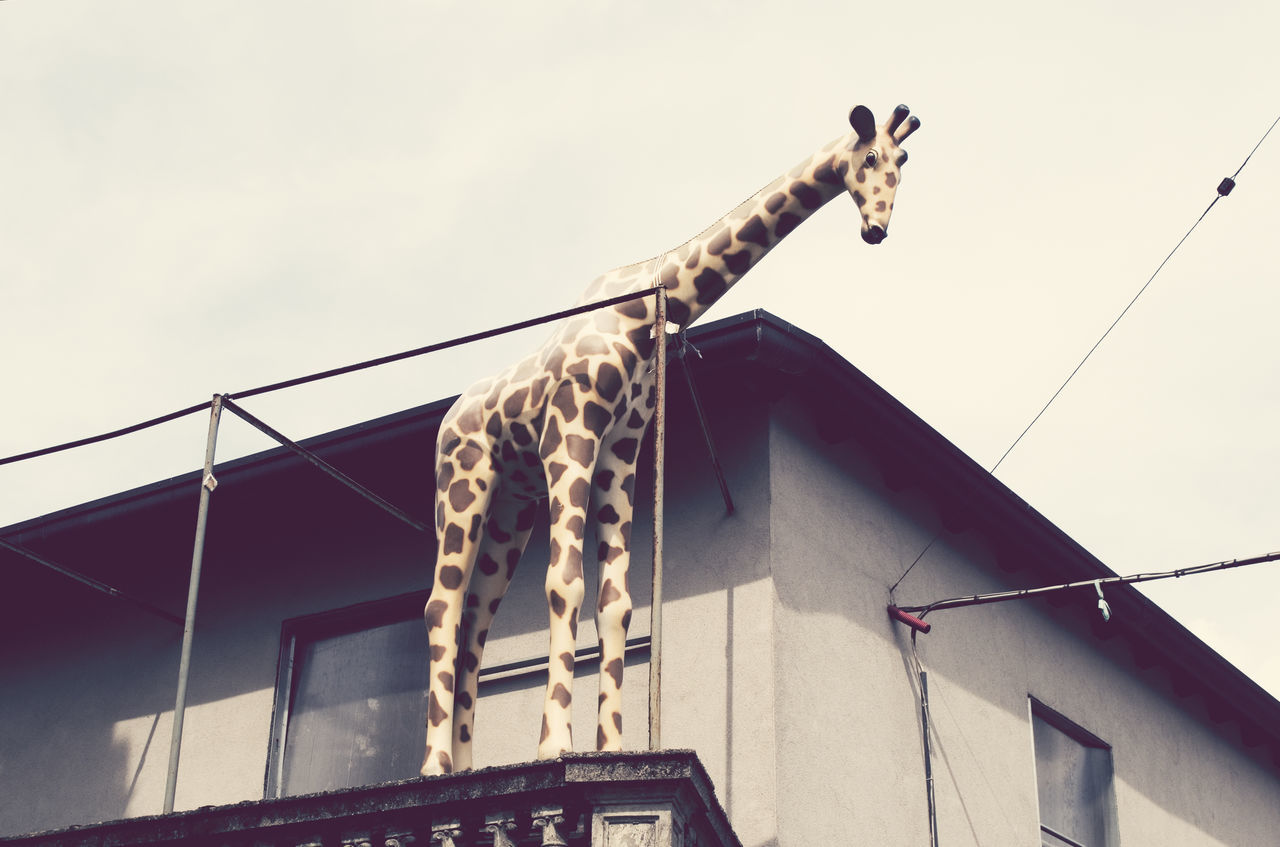 a giraffe reproduction on the balcony Absurd Animal Balcony Bizarre Building Exterior Facsimile Fake False Funny Giraffe Horizontal House Humor Imitation Likeness No People Oddity Out Of Context Outdoor Replica  Representation Reproduction Sculpture Unexpected