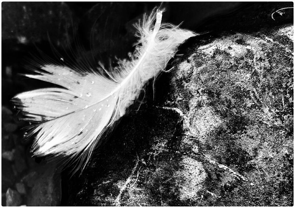 Feather  Stone Water B&w Blackandwhite Monochrome The View From Here Black & White Black And White 2015 08 12