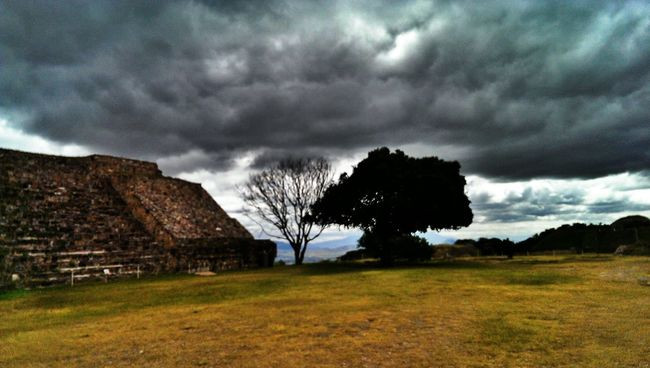 Monte Alban For The Love Of Trees ~