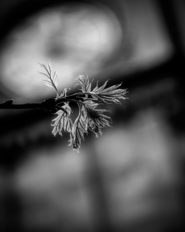 Blackandwhite Photography Blackandwhite Bokeh Nature Nature Photography Nikonphotography Nikon Nikon D7200