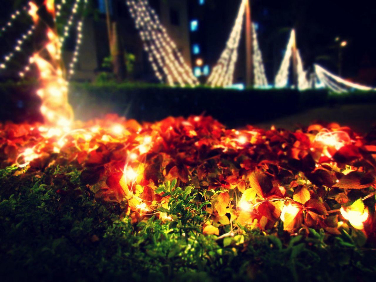 DIwali lights! Spread a smile by sharing love and happiness :) Bush Bushes Diwali Diwali2014 Glowing Lights Night Night Photography Night View Nightlife Nightout Nightphotography Nightshot Tree First Eyeem Photo