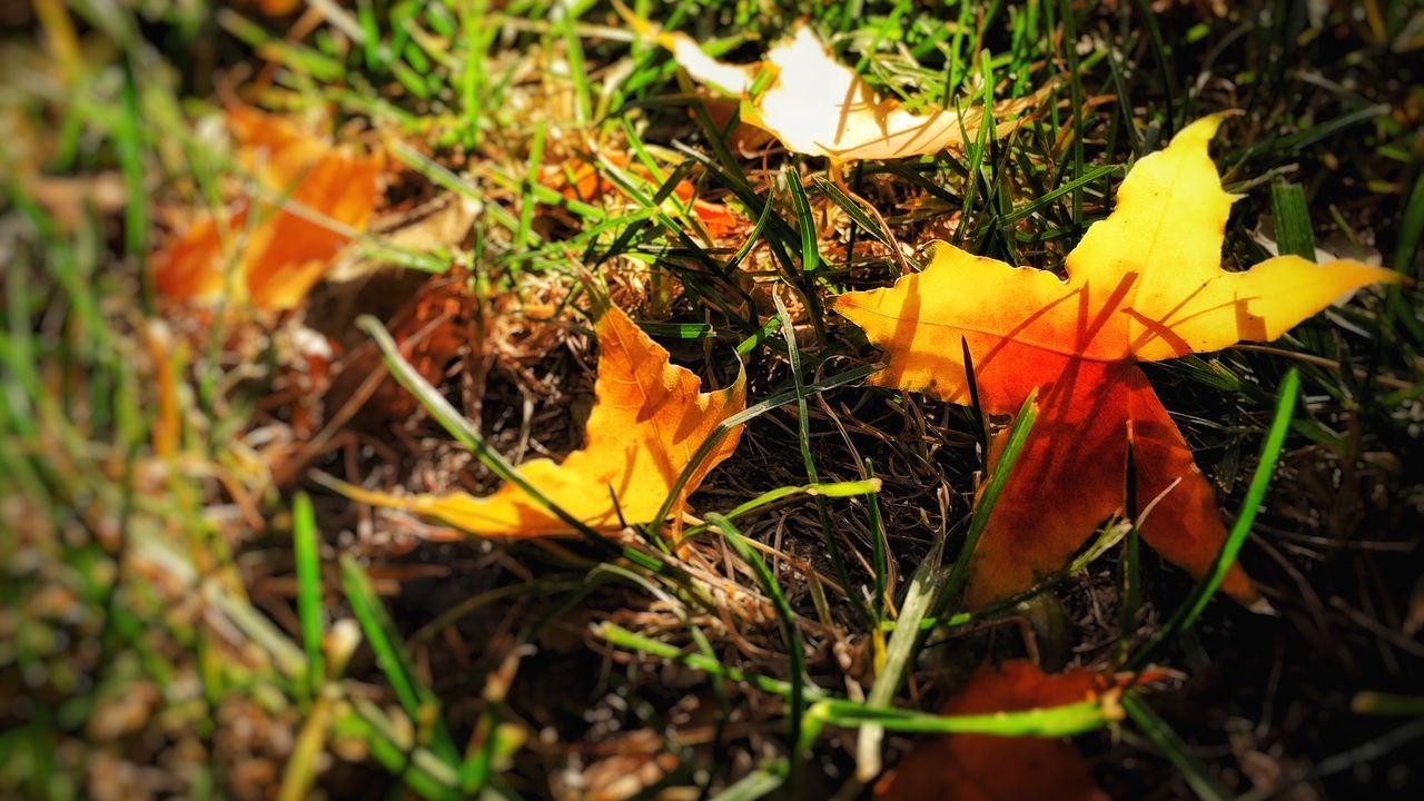 Nature Leaf Yellow Orange Color Grass Outdoors Beauty In Nature