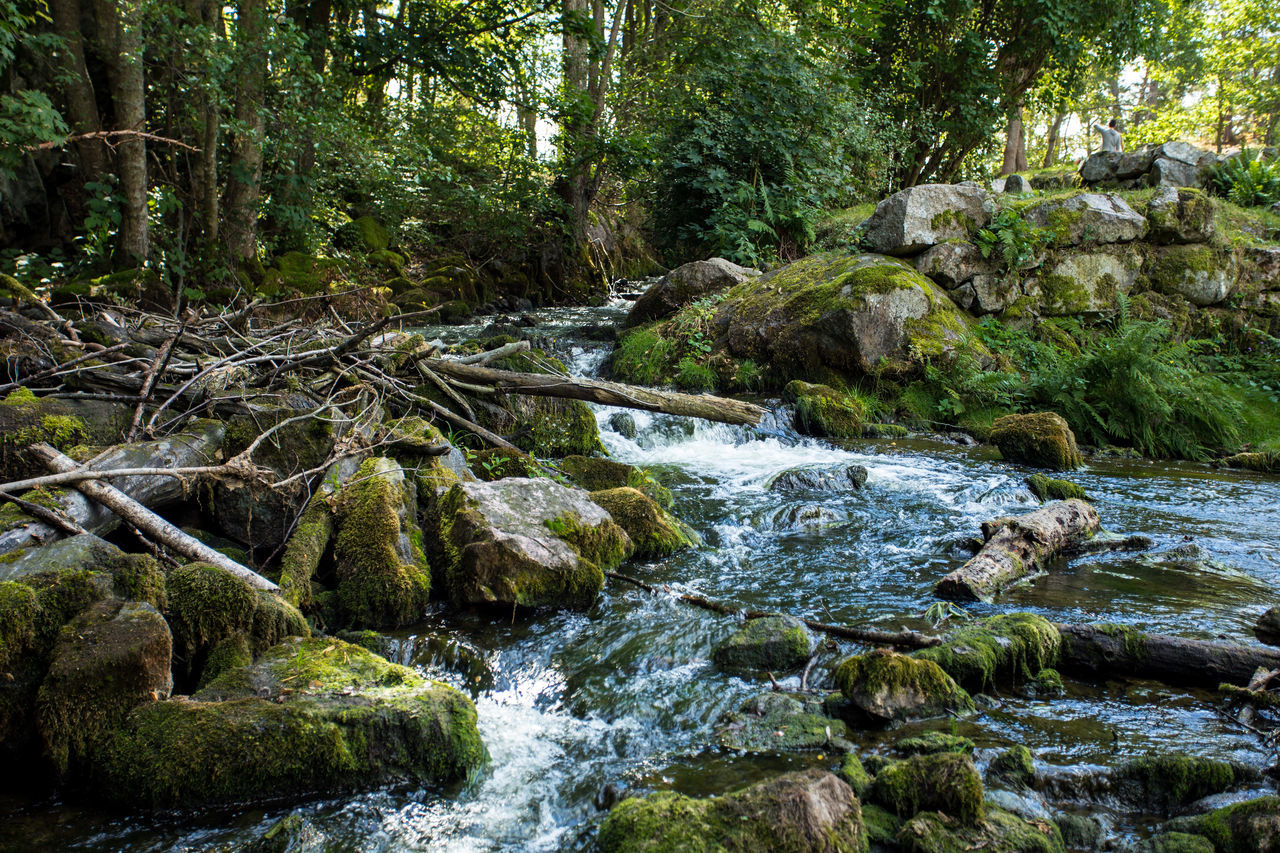The river Taking Photos Rock Forest Woods Tranquil Scene Nature Remote Senic Tree Idyllic Senic View Beauty In Nature Amazing View Outdoors Amazing Sky Water